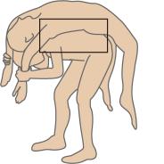 背中ストレッチ図